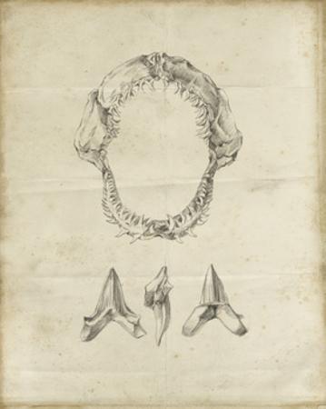 Shark Study I by Ethan Harper