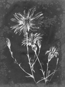 Slate Floral III by Ethan Harper