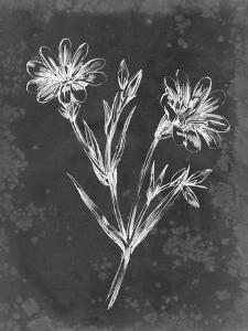 Slate Floral IV by Ethan Harper