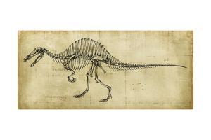 Spinosaurus Study by Ethan Harper