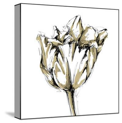 Tulip Sketch I
