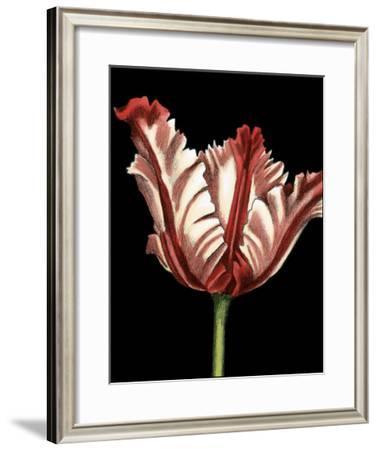 Vibrant Tulips II