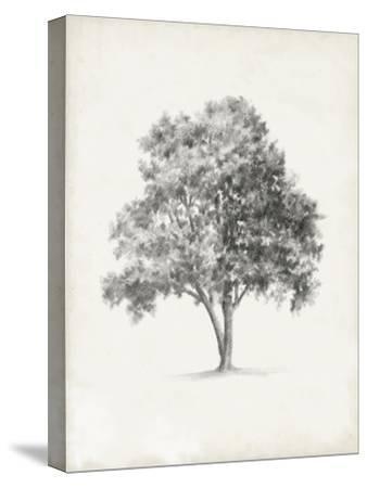 Vintage Arbor Study I