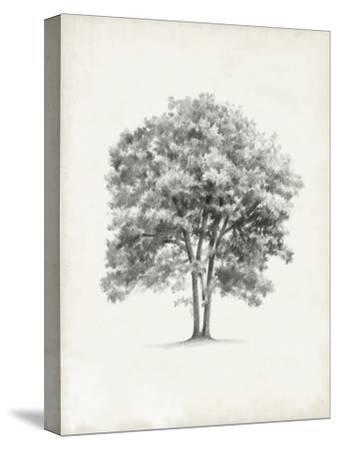 Vintage Arbor Study II