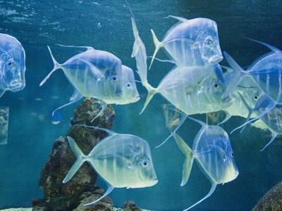 Aquarium, Oceanographic Institute, Monaco-Veille, Monaco
