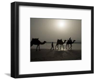 Camels on the Beach, Essaouira, Morocco, North Africa, Africa