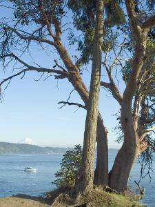 Gig Harbour, Washington State, USA by Ethel Davies