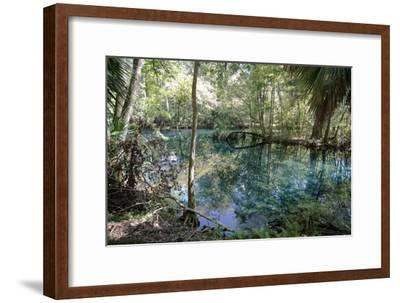 Natural Springs at Silver Springs State Park, Johnny Weismuller Tarzan films location, Florida, USA