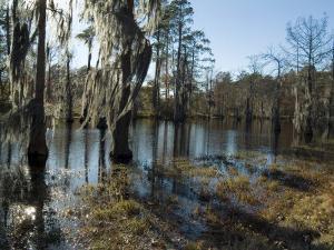 Sam Houston Jones State Park, Lake Charles, Louisiana, USA by Ethel Davies