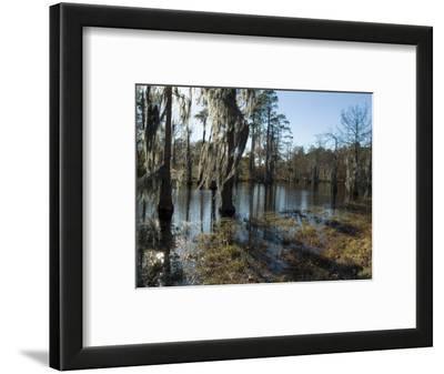 Sam Houston Jones State Park, Lake Charles, Louisiana, USA