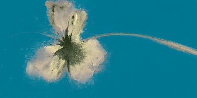 Ethereal Blue II-Emma Forrester-Art Print