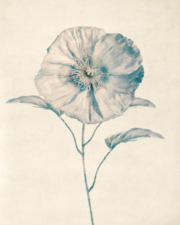 https://imgc.artprintimages.com/img/print/ethereal-floral-ii_u-l-f8kj9t0.jpg?p=0