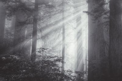 https://imgc.artprintimages.com/img/print/ethereal-light-and-coast-redwoods-california_u-l-q1gdp410.jpg?p=0