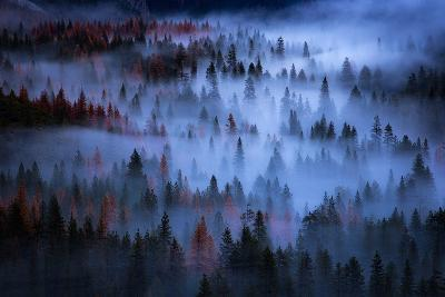 Ethereal Mesmer Fog & Light Trees Sark Yosemite Winter Storm Valley-Vincent James-Photographic Print