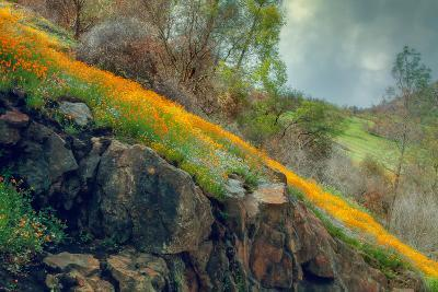 Ethereal Spring and Poppy Hillside--Photographic Print