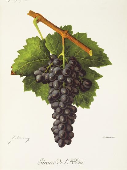 Etraire Del'Adui Grape-J. Troncy-Giclee Print