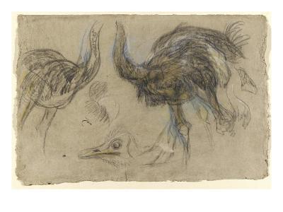 Etude de deux autruches debout et d'une tête-Pieter Boel-Giclee Print
