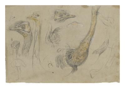 Etudes d'autruches-Pieter Boel-Giclee Print