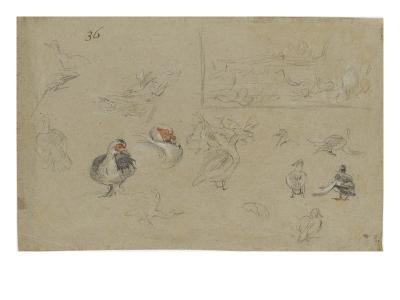 Etudes de canards-Pieter Boel-Giclee Print