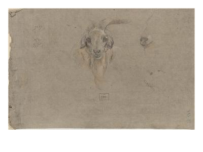 Etudes de tête de bouquetin-Pieter Boel-Giclee Print