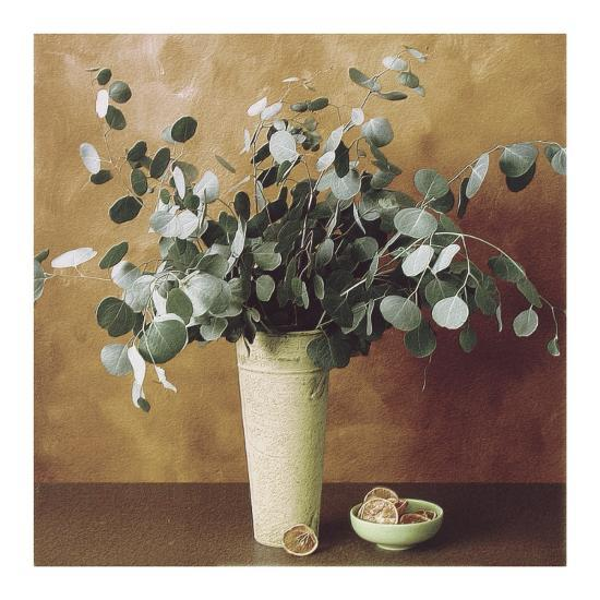 Eucalyptus and Oranges-Judy Mandolf-Art Print