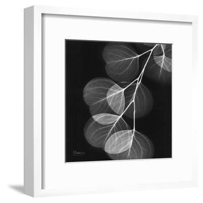 Eucalyptus Black and White II-Albert Koetsier-Framed Art Print