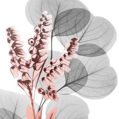 https://imgc.artprintimages.com/img/print/eucalyptus-blush-2_u-l-q1bcjtb0.jpg?p=0