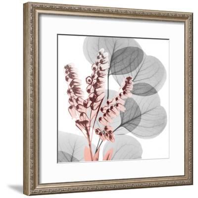 Eucalyptus Blush 2-Albert Koetsier-Framed Photo