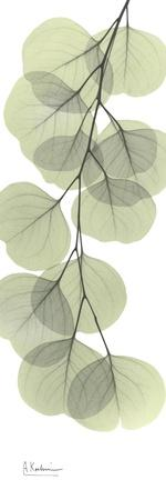 https://imgc.artprintimages.com/img/print/eucalyptus-branch-down_u-l-pyjq6h0.jpg?p=0