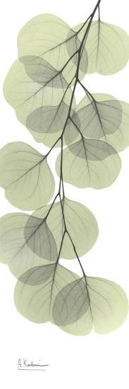 Eucalyptus Branch Down-Albert Koetsier-Premium Giclee Print