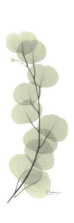 https://imgc.artprintimages.com/img/print/eucalyptus-branch-up_u-l-pyk07e0.jpg?p=0