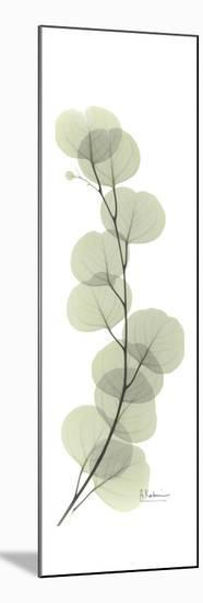 Eucalyptus Branch Up-Albert Koetsier-Mounted Premium Giclee Print