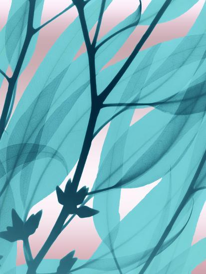 Eucalyptus Cotton Candy-Albert Koetsier-Art Print