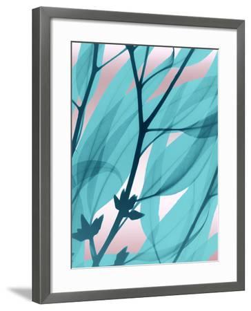 Eucalyptus Cotton Candy-Albert Koetsier-Framed Art Print