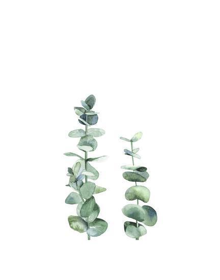 Eucalyptus I-Ann Solo-Art Print