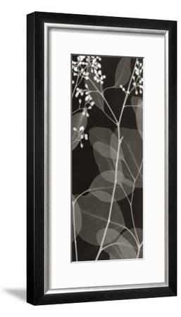 Eucalyptus V-Steven N^ Meyers-Framed Art Print