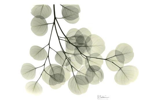 Eucalyptus-Albert Koetsier-Art Print