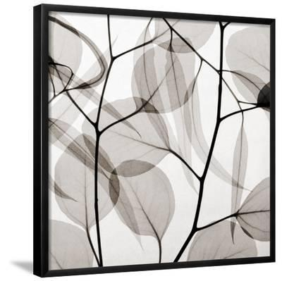 Eucalytus Leaves [Positive]-Steven N^ Meyers-Framed Art Print