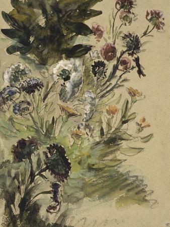 Etudes de fleurs : Soucis, hortensias et reines- marguerites; vers 1840-1850