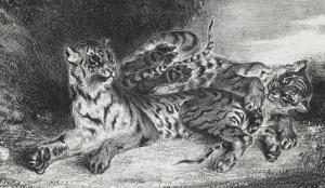Jeune tigre jouant avec sa mère, lithographie 1er état by Eugene Delacroix