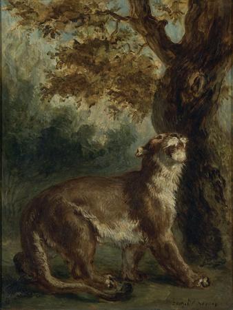 Le Puma, dit aussi Lionne guettant une proie
