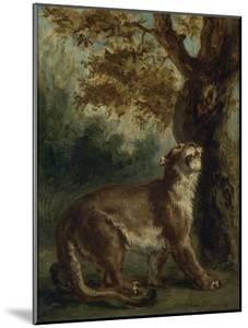 Le Puma, dit aussi Lionne guettant une proie by Eugene Delacroix