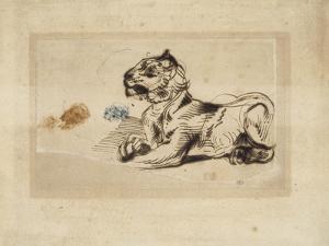 Tigre couché, de profil à droite by Eugene Delacroix