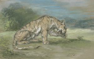 Tigre couché, tourné à droite, léchant une de ses pattes de devant by Eugene Delacroix