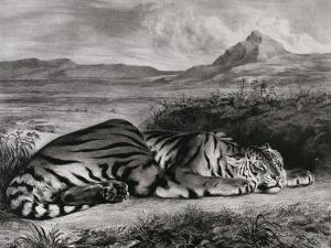 Tigre royal by Eugene Delacroix