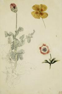 Trois études de fleurs: anémone, pensée, ?; vers 1845-1850 by Eugene Delacroix