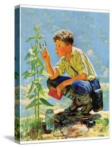 """Boy Botanist,""August 27, 1932 by Eugene Iverd"