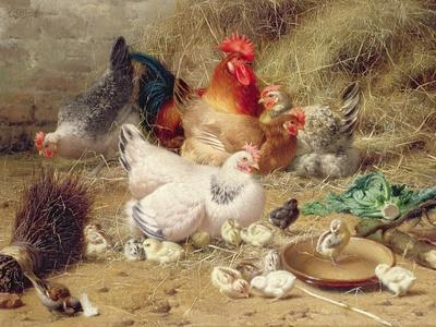 Hens Roosting with their Chickens