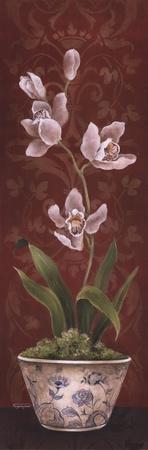 Organic Orchids I