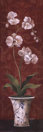 Organic Orchids II